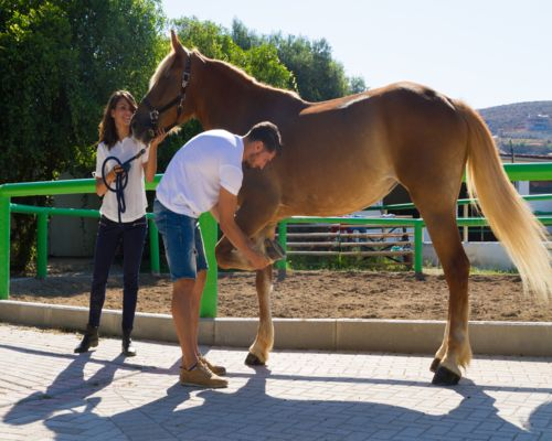 Horse-Massage-and-Hydrotherapy